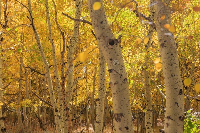 美好的秋天颜色在加利福尼亚 库存照片