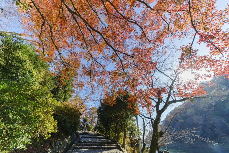 美好的秋天颜色在Arashiyama 库存照片