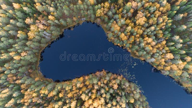 美好的秋天 在树梢中间的森林令人惊讶的颜色的小湖,冠上在wildwood下的图象 库存照片