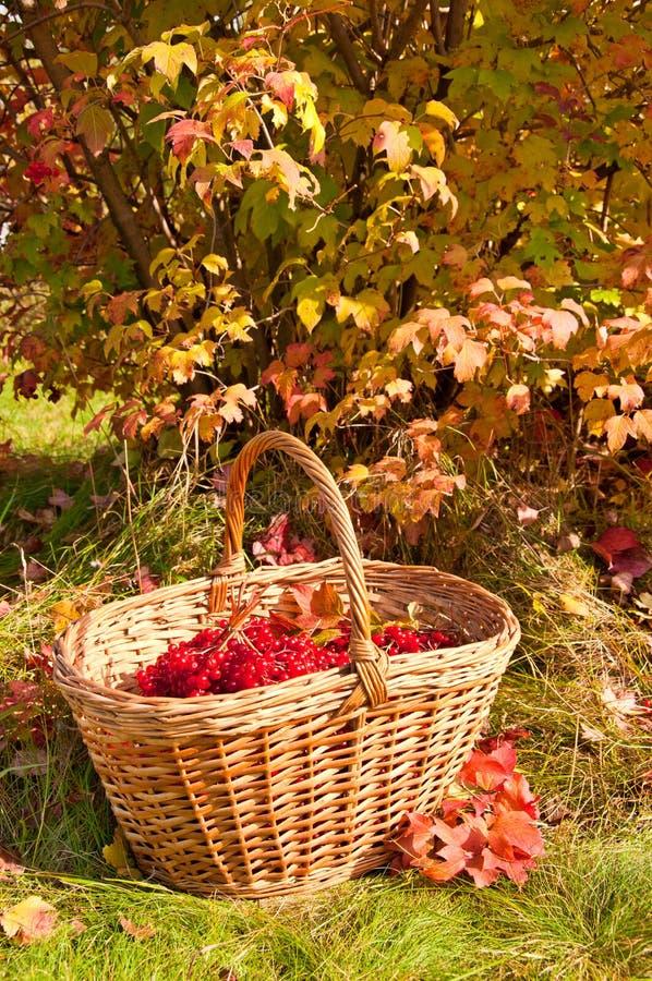 美好的秋天 在篮子的秋天收获 库存照片