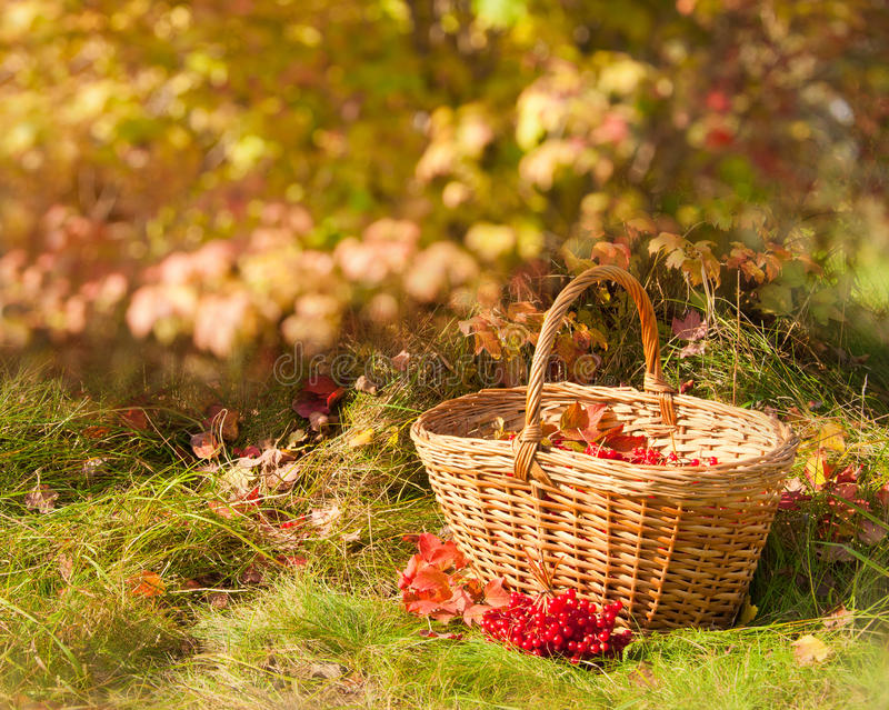 美好的秋天 在篮子的秋天收获 免版税库存照片