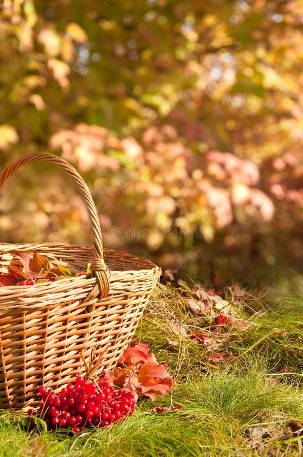 美好的秋天 在篮子的秋天收获 免版税库存图片