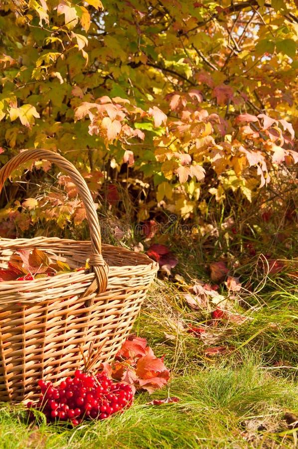 美好的秋天 在篮子的秋天收获 免版税图库摄影