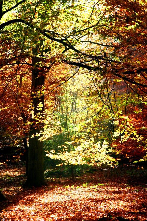 美好的秋天 库存照片