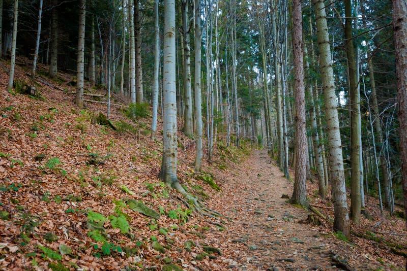 美好的秋天Beskidy山风景 库存照片