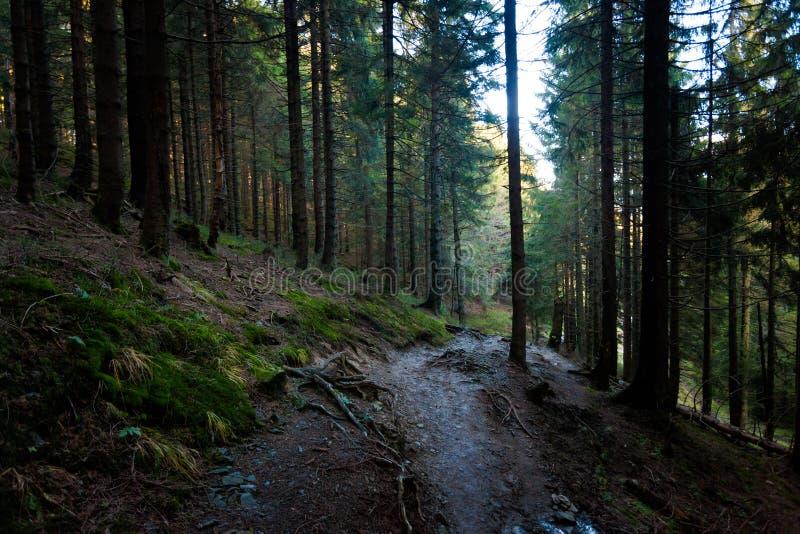 美好的秋天Beskidy山风景 库存图片