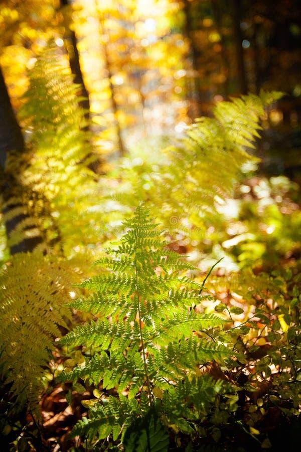 美好的秋天fem详细资料 库存图片