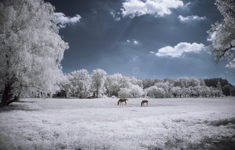 美好的红外风景 免版税库存照片