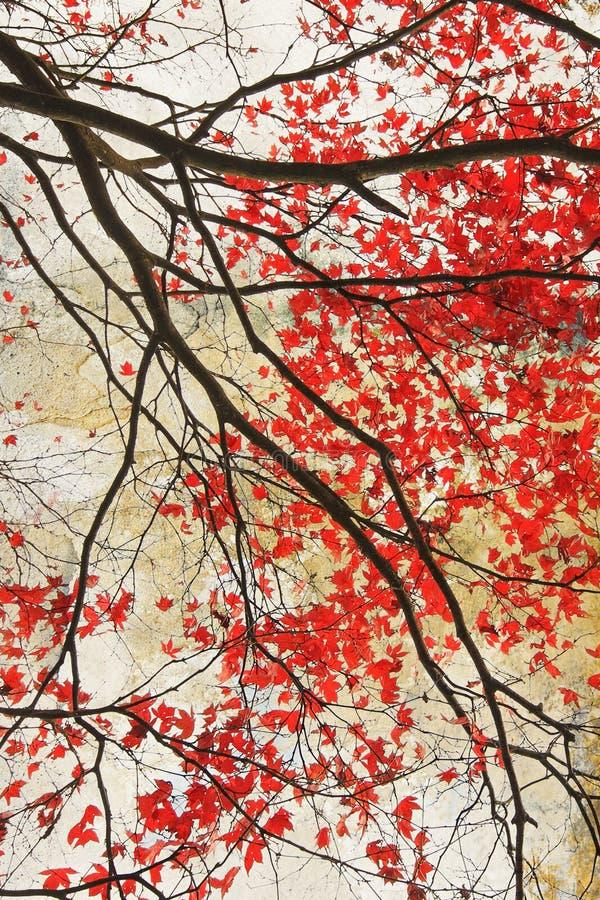 美好的红槭脏的背景 免版税库存图片