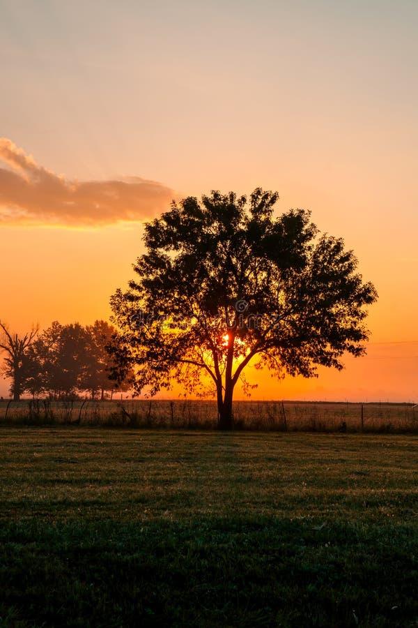 美好的红色和橙色日出照亮现出轮廓树的一个有雾的牧场地 库存图片