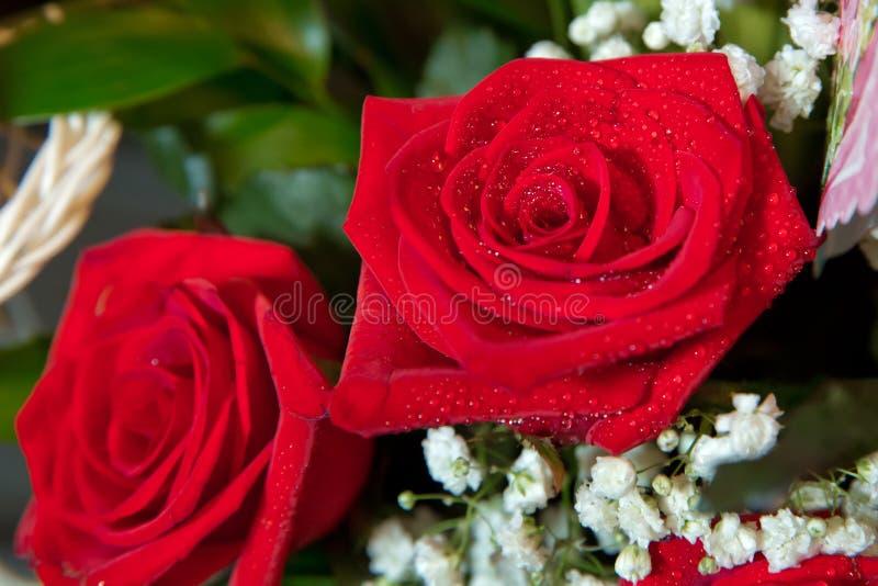 美好的红色玫瑰色背景,与露滴的鲜花在瓣,抽象花卉背景,减速火箭的样式照片的图象,我们 库存照片