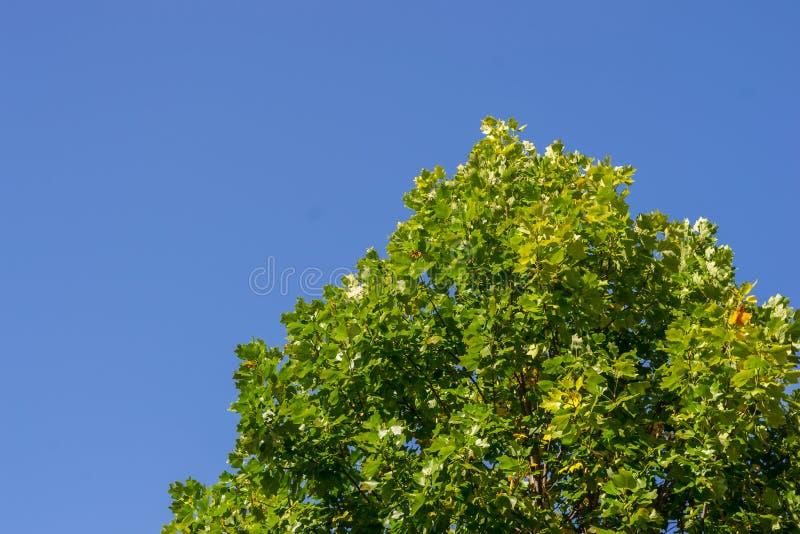 美好的绿色上色了有蓝天的叶子 库存照片