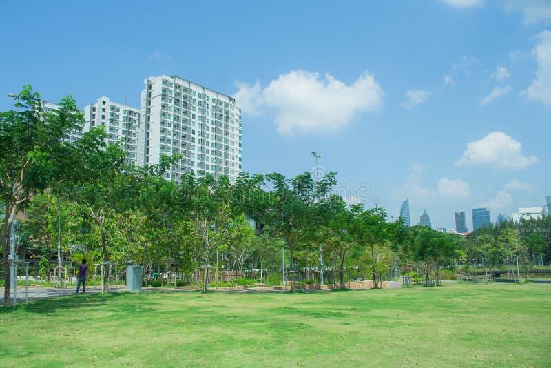 美好的绿草草甸领域在有城市大厦的公园在背景中 库存图片