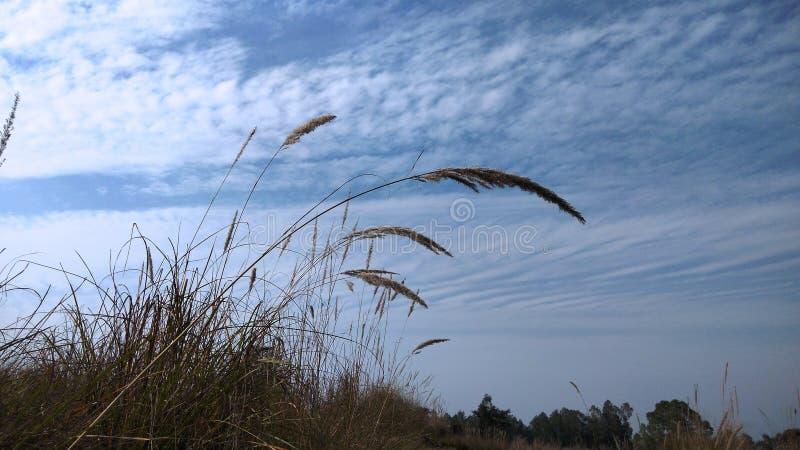 美好的自然和蓝天 图库摄影