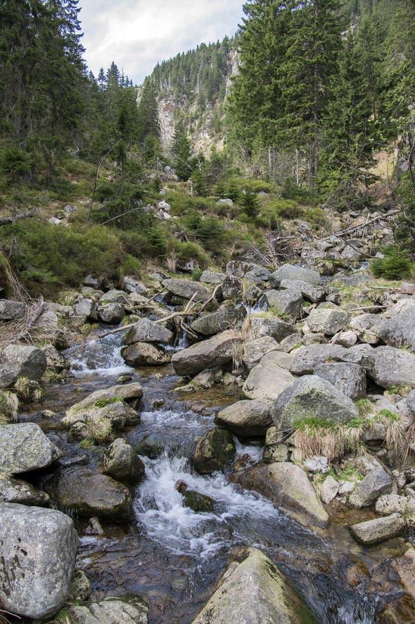 美好的自然地方在早期的春天,狂放的山小河叫拉布斯卡bouda,令人惊讶的风景,自然 免版税库存照片