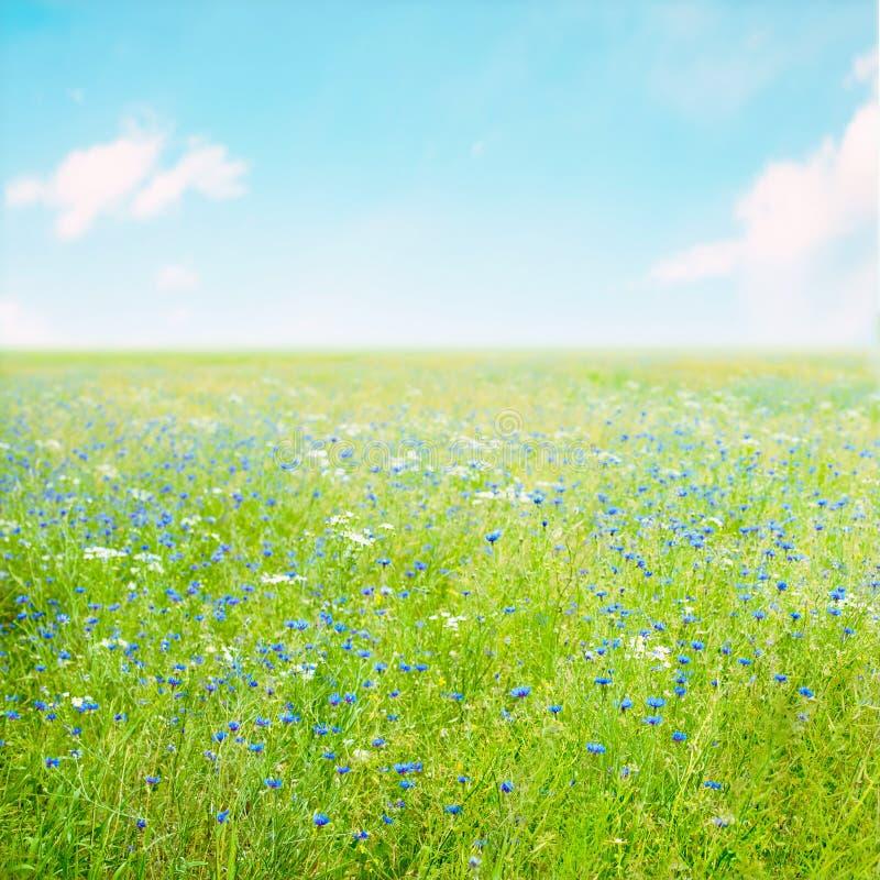 美好的自然夏天花背景 库存照片