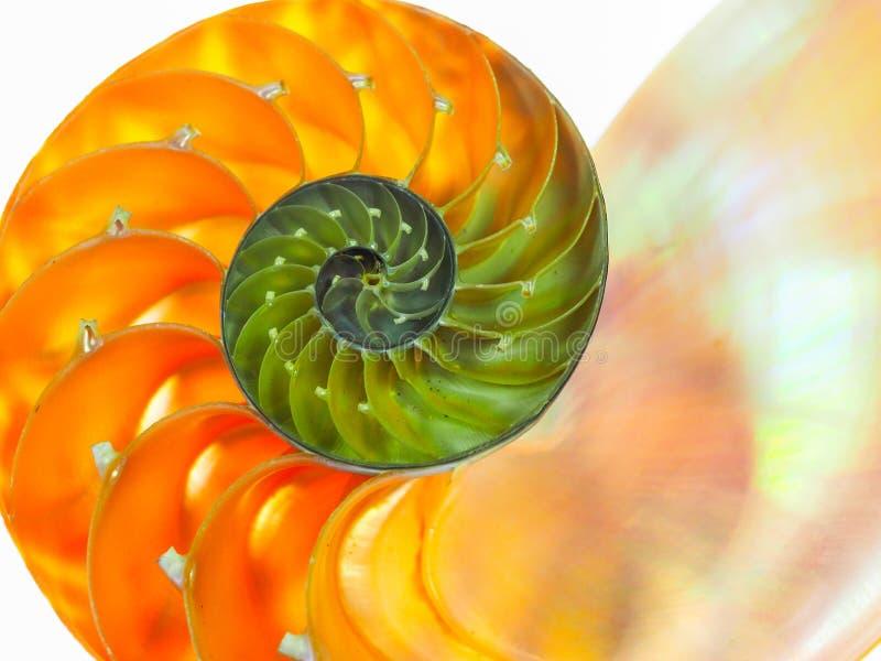美好的舡鱼桔子壳的特写镜头 图库摄影