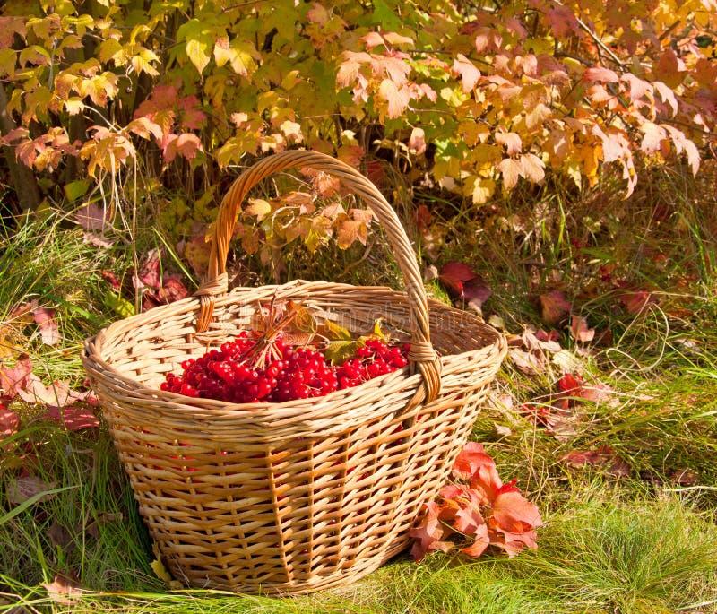 美好的色的秋天 在篮子的秋天收获 免版税图库摄影