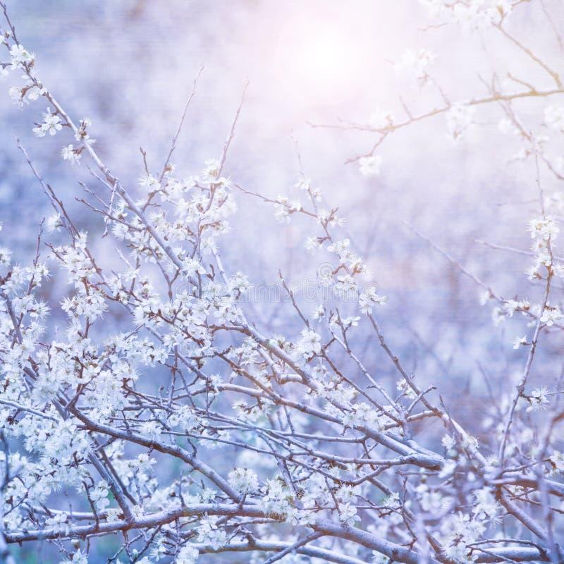 美好的花卉背景 免版税图库摄影