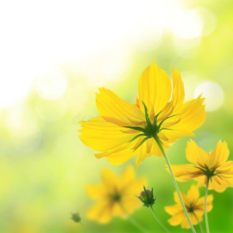美好的花卉黄色 免版税库存图片