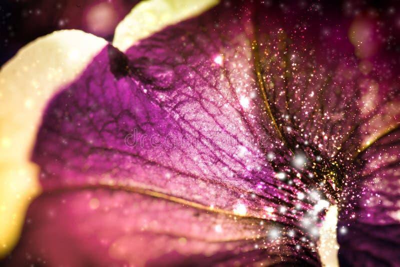 美好的花卉abctract背景 免版税库存照片