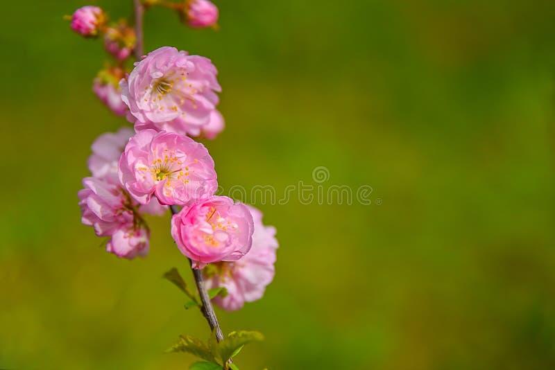 美好的花春天 图库摄影