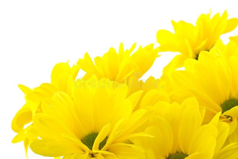 美好的花束菊花黄色 免版税库存图片