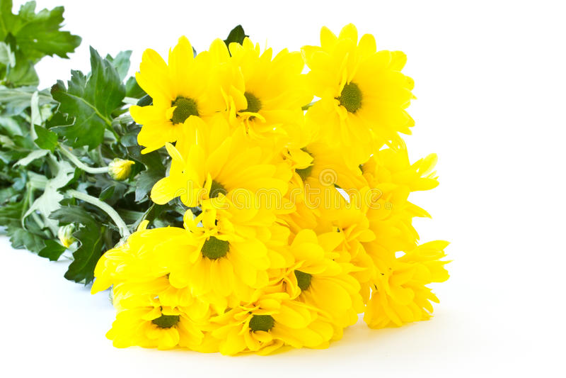 美好的花束菊花黄色 库存照片