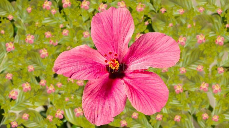 美好的花粉红色 库存图片