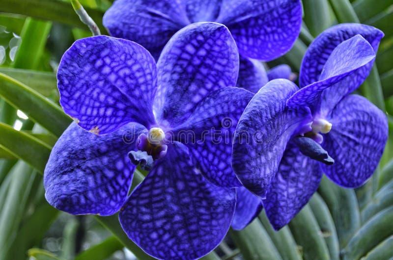 美好的花紫色 图库摄影