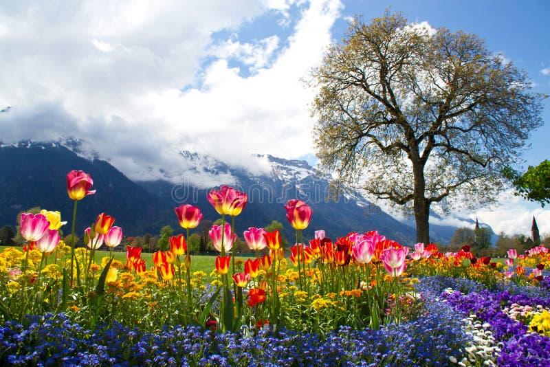 美好的花风景 免版税库存图片