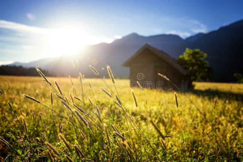 美好的草甸春天 与小屋的晴朗的清楚的天空在山 充分五颜六色的领域的花 格赖瑙,德国 库存图片