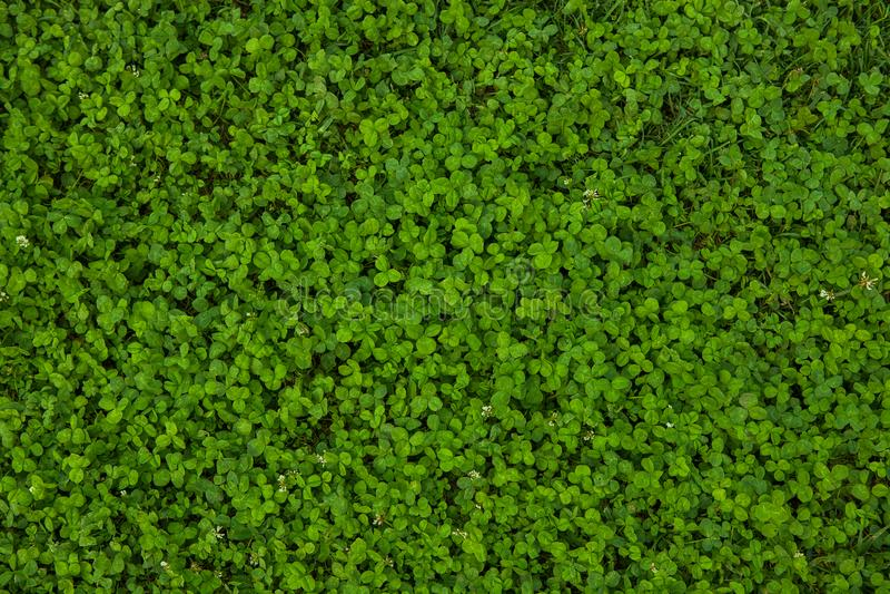 美好的草绿色纹理 库存照片