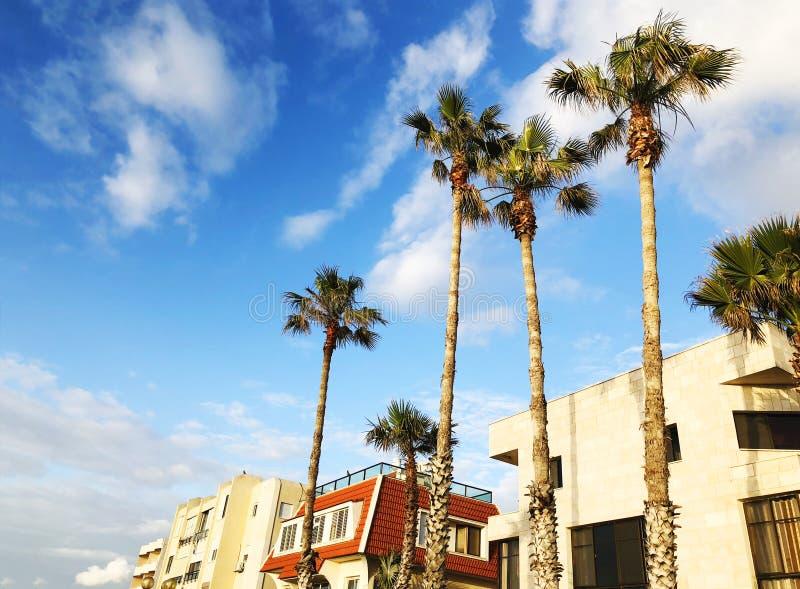 美好的藍色晴天 樹棕櫚樹在反對天空和房子的熱的夏日圖片