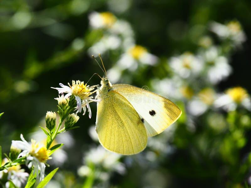 美好的蝶粉花开会 免版税库存照片