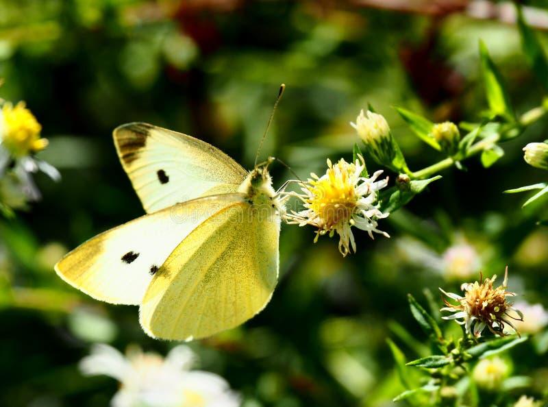 美好的蝶粉花开会 库存照片