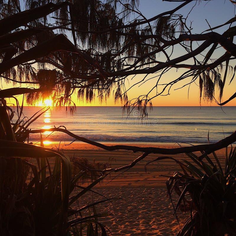 美好的金黄海洋海滩日出 库存图片