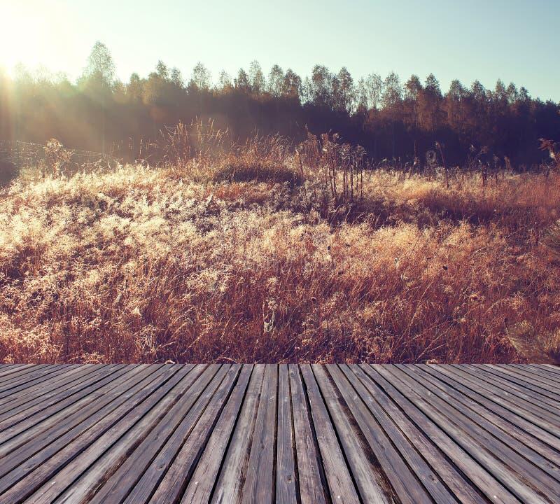 美好的阳光在有木板条地板的秋天森林里 免版税库存图片