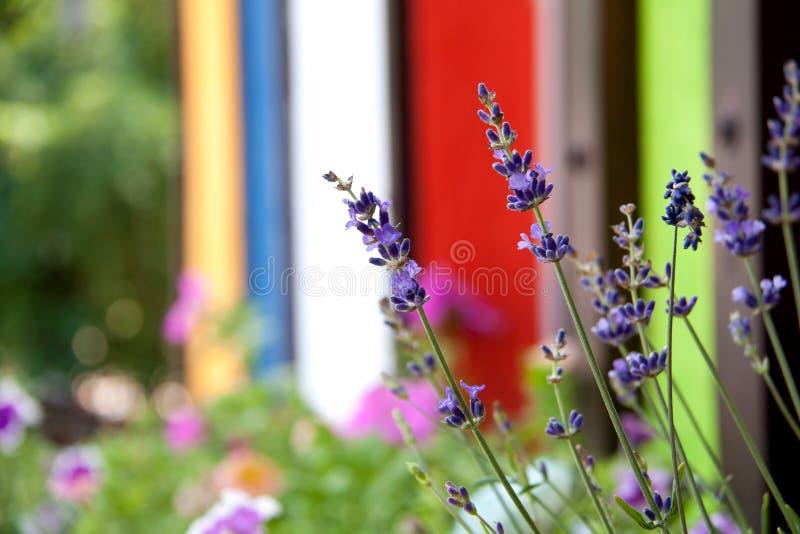 美好的领域在五颜六色的篱芭附近开花 图库摄影