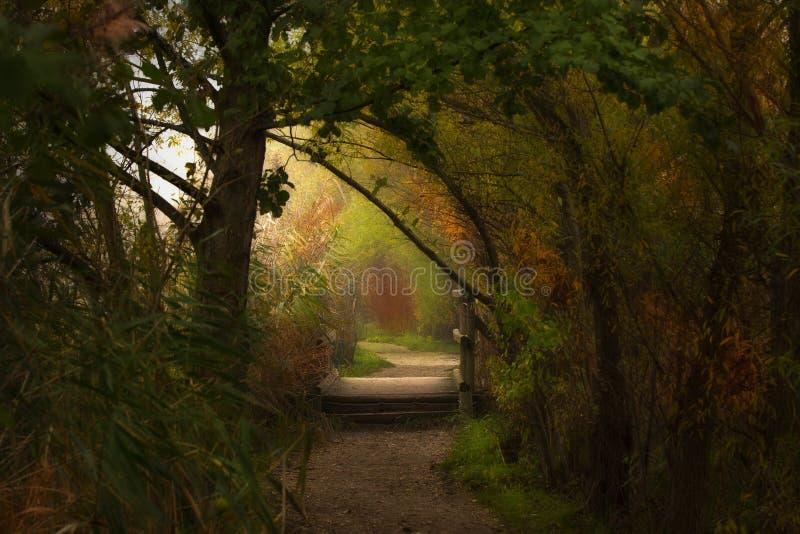美好的颜色在森林里 库存照片