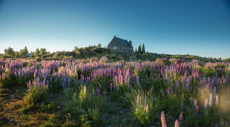 美好的风景新西兰。 免版税库存照片