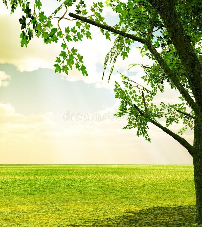 美好的风景春天 库存图片