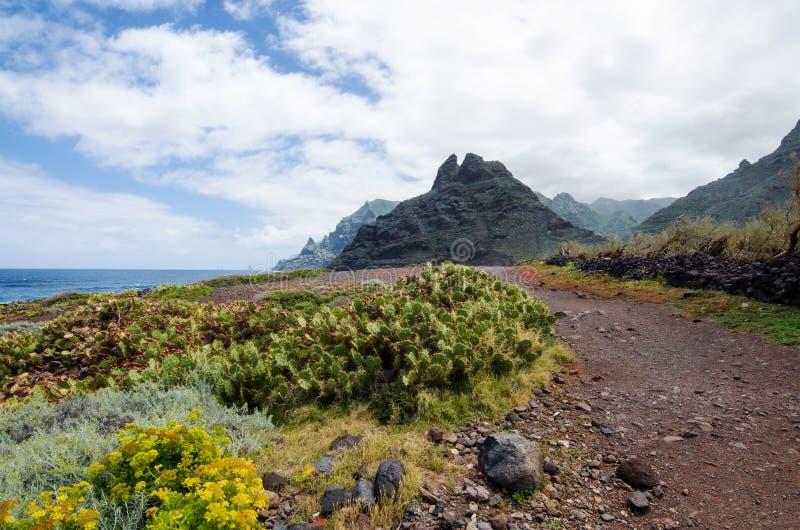 美好的风景有在供徒步旅行的小道的看法,蓬塔del Fronton山在Anaga农村公园,特内里费岛,加那利群岛 免版税库存照片