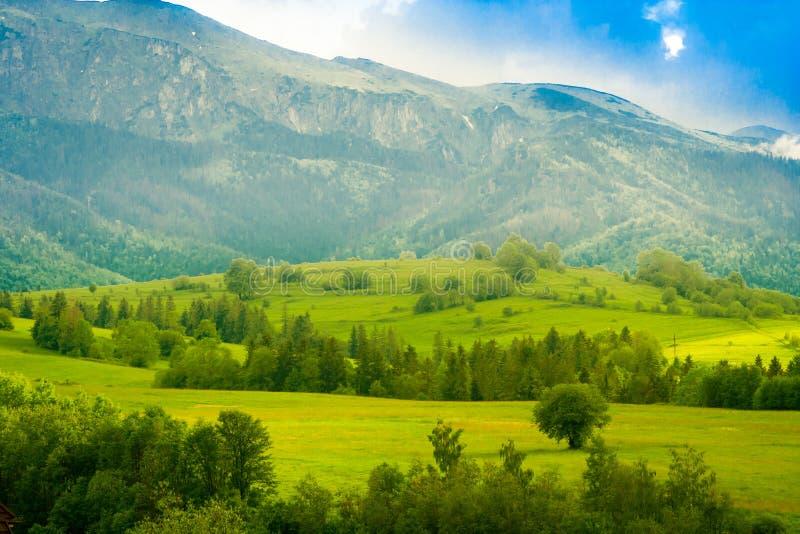 美好的风景看法在Tatra山的与新鲜的绿色草甸 免版税库存照片