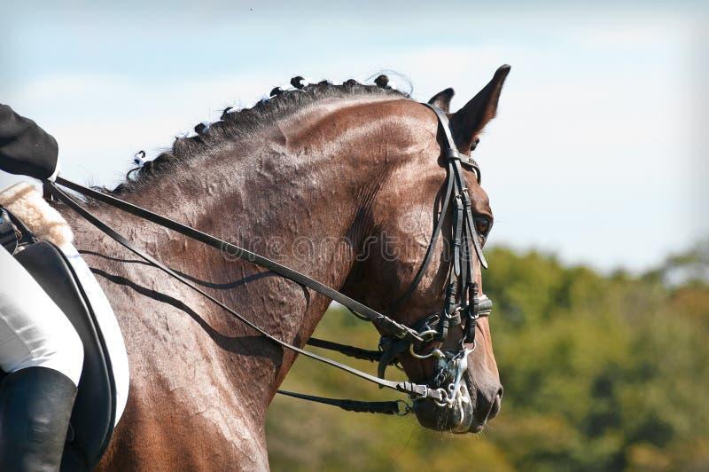 美好的驯马马体育运动 免版税图库摄影