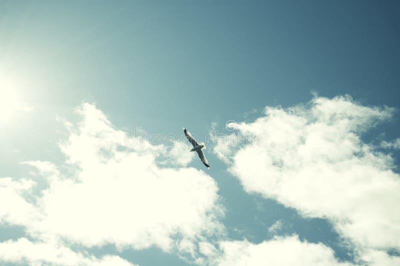 美好的鸟飞行 免版税库存照片