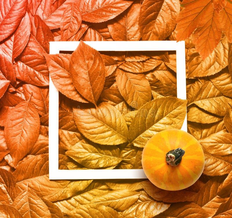 美好的黄色秋叶背景和框架用南瓜 免版税库存图片