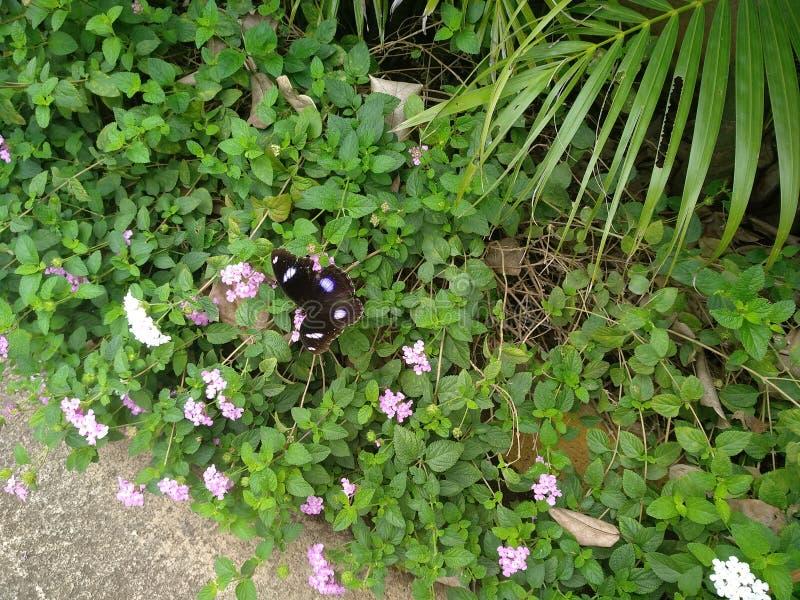 美好的黑色上色了基于花的蝴蝶 库存照片