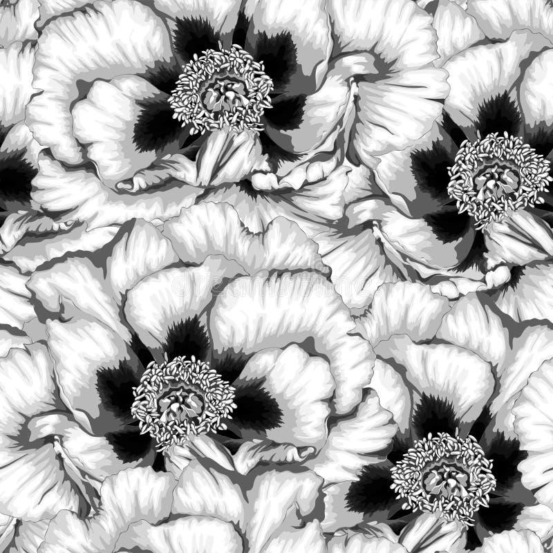 美好的黑白照片,与花的黑白无缝的背景种植芍药属arborea (树牡丹) 皇族释放例证