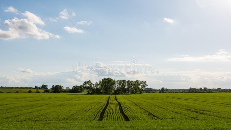 美好的绿色领域在蓝天下在夏天 免版税库存照片